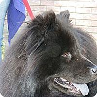 Adopt A Pet :: Duckie - Tillsonburg, ON
