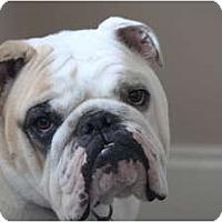 Adopt A Pet :: Hanky Panky - conyers, GA