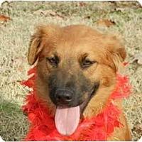 Adopt A Pet :: Josie - Glastonbury, CT