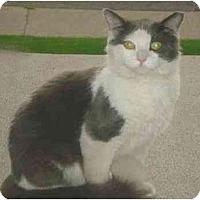 Adopt A Pet :: Scrappy - Hamilton, ON