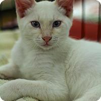 Adopt A Pet :: Al - Sacramento, CA