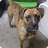 Adopt A Pet :: Jaxson - Geneseo, IL