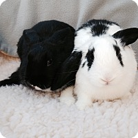 Adopt A Pet :: Ashton & Addie - Watauga, TX