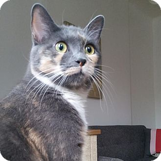 Calico Cat for adoption in Brooklyn, New York - Mimi