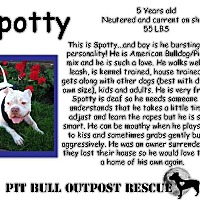 Adopt A Pet :: Spotty - Lafayette, OR
