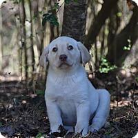 Adopt A Pet :: Chewey - Groton, MA