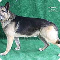 Adopt A Pet :: *NORMAN - Hanford, CA