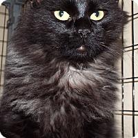 Adopt A Pet :: Atlas - Grants Pass, OR