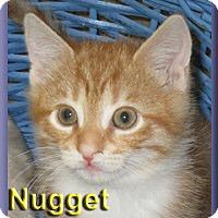 Adopt A Pet :: Nugget - Aldie, VA