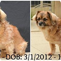 Adopt A Pet :: Joey - Siler City, NC
