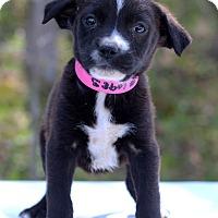 Adopt A Pet :: Grenada - Waldorf, MD