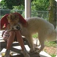 Adopt A Pet :: Bohdi - Minneapolis, MN