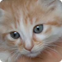 Adopt A Pet :: Steven - Hamilton, ON