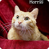 Adopt A Pet :: Morris - Foothill Ranch, CA