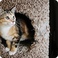 Adopt A Pet :: Kit-Kat - Palmdale, CA