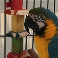 Adopt A Pet :: Einstein - Punta Gorda, FL