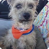 Adopt A Pet :: Ernie - Las Vegas, NV