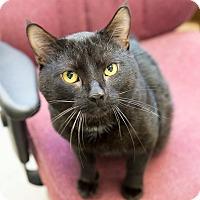 Adopt A Pet :: Roller - Schererville, IN
