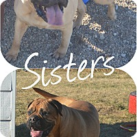 Adopt A Pet :: Ashlie & Autumn - Prole, IA