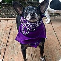 Adopt A Pet :: Mindy - Santa Ana, CA