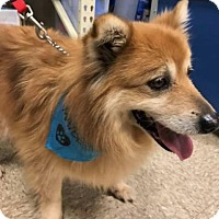 Adopt A Pet :: Martha - Mooresville, NC