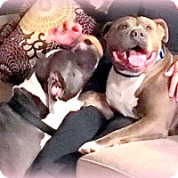 Adopt A Pet :: Blue Enzo - Hermosa, CA
