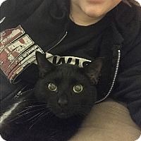 Adopt A Pet :: Train (COURTESY POST) - Baltimore, MD