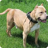 Adopt A Pet :: CLYDE - Decatur, IL