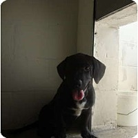 Adopt A Pet :: Justin - Winter Haven, FL