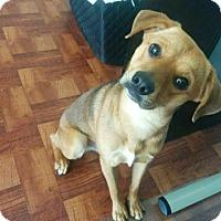 Adopt A Pet :: Beans - Austin, TX