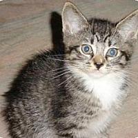 Adopt A Pet :: Punky - Miami, FL