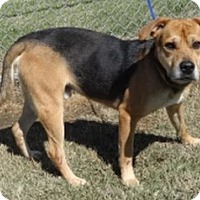 Adopt A Pet :: Buster Brown - Olive Branch, MS
