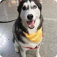 Adopt A Pet :: Ha Jiang - Richmond, BC