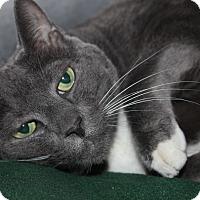 Adopt A Pet :: DOLCE - Clayton, NJ