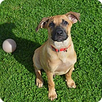 Adopt A Pet :: Digby - Pittsburgh, PA