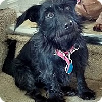 Adopt A Pet :: Spud - Toronto, ON