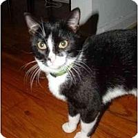 Adopt A Pet :: Patti - New York, NY