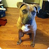 Adopt A Pet :: Harlem - Santa Monica, CA