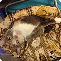 Adopt A Pet :: Callie - Chesapeake, VA