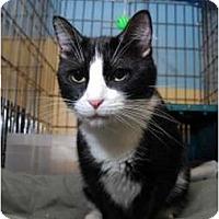 Adopt A Pet :: Eloise - New York, NY