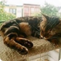 Adopt A Pet :: Raja - Vancouver, BC