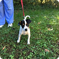 Adopt A Pet :: Reegal (POM-LR) - Brattleboro, VT