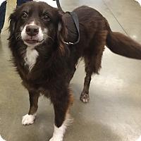 Adopt A Pet :: Bonnet (Candy) - Orlando, FL