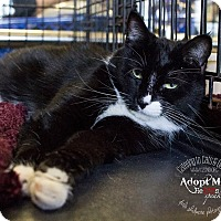 Adopt A Pet :: A..  Chaselynn - Mooresville, NC