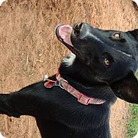 Adopt A Pet :: Ulani - Denver City, TX
