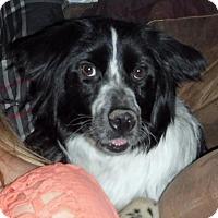 Adopt A Pet :: **MOONSHINE - Peralta, NM