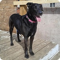 Adopt A Pet :: Baby - Hamilton, ON