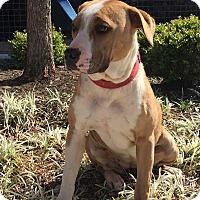 Adopt A Pet :: Penelope - Dallas, TX