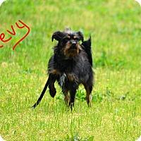 Adopt A Pet :: Chevy - Lebanon, MO