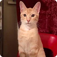 Adopt A Pet :: Stanley - Arlington/Ft Worth, TX